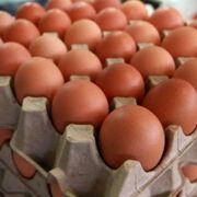El sector del huevo pide ayudas para poder eliminar las jaulas